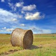 Round bales of straw in the meadow under a blue sky — Foto Stock