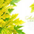 Colorful autumn leaves on white background with sample text — Stock Photo #13879089