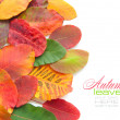 Colorful autumn leaves on white background with sample text — Stock Photo #13879099