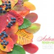 Colorful autumn leaves on white background with sample text — Stock Photo #13879101