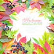 Beautiful frame of autumn leaves isolated on white with sample text — Stock Photo #13879103