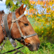 Horse is with the old trappings of autumn sunny day — Stock Photo