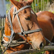 Horse is with the old trappings of sunny day — Stock Photo