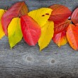 Autumn Leaves over old wooden background — Lizenzfreies Foto