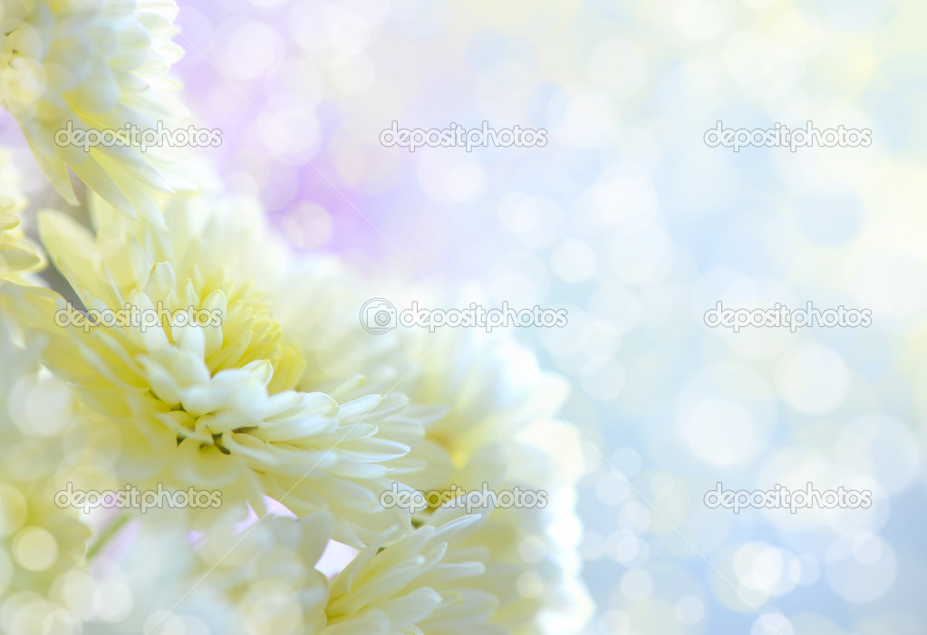 Flowers of white chrysanthemum under the sun light, with beautiful bokeh — Stock Photo #13879119