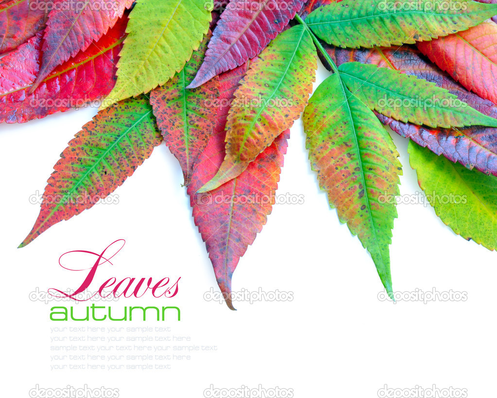 Colorful autumn leaves on white background with sample text  Stock Photo #13879120