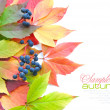 Autumn leaves background isolated on white with sample text — Stockfoto