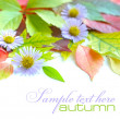 Autumn leaves background with flowers isolated on white with sample text — Стоковая фотография