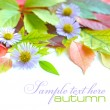 Autumn leaves background with flowers isolated on white with sample text — ストック写真