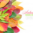 Colorful autumn leaves on white background with sample text — Stock Photo #15617775