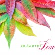 Colorful autumn leaves on white background with sample text — Stock Photo #15617937