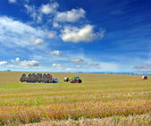 Landscape with a tractor that loads bales of straw — Stock Photo