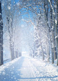 Beautiful winter landscape with snow covered trees — Foto de Stock