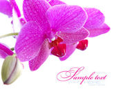 Beautiful Orchid isolated on white — Stock Photo