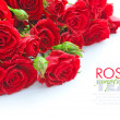 Stock Photo: Red roses on white background