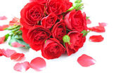 Red roses and petals on white background — Stock Photo