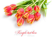 Tulips flowers isolated on white — Stok fotoğraf