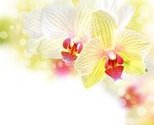 Schöne orchidee grenze — Stockfoto