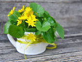 Bouquet of Lesser Celandine (Ranunculus ficaria) on a old wooden — Stock Photo