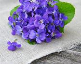 Wood violets flowers (Viola odorata) on sackcloth — Stock Photo