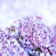 A tender background is with the fresh flowers of lilac — 图库照片