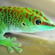 Stock Photo: Green gecko lizard