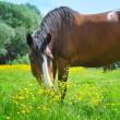 Horse on a pasture — Stock Photo #27000461
