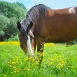 Stock Photo: Horse on a pasture