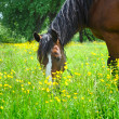 Horse on a pasture — Stock Photo #27000479