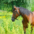 Stock Photo: Horse on a green grass