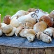 A group of Boletus Edulis is on a stump — Foto de Stock