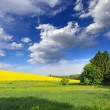 Countryside landscape with yellow rapeseed field — Stock Photo
