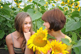 Young beautiful women in a sunflower field — Stock Photo