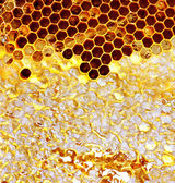 Sweet honeycomb of wild bees — Stock Photo