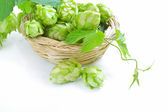 Branch of hop is with cones and sheets (Humulus lupulus) are in a little basket on a white background — Photo