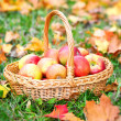 Organic Apples in a Basket outdoor. Autumn Garden — Stock Photo