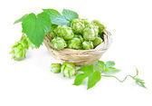 Branch of hop is with cones and sheets (Humulus lupulus) are in a little basket on a white background — Stock Photo