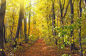 Beautiful morning in the autumn forest with sun rays — Stock Photo