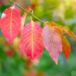 Autumn background is with colourful leaves — Stock Photo