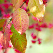 Beautiful autumn background is with the sprig of spindle tree — Stock Photo