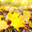 Beautiful autumn background with maple leaves — Stock Photo