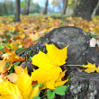 Autumn leaves in forest — Stock Photo