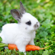 Funny baby white rabbit with a carrot in grass — Stock Photo #34452677