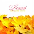 Border frame of colorful autumn leaves isolated on white — Stock Photo