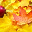 Red apple on autumn maple leaves — Stock Photo