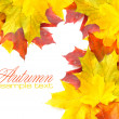 border frame of colorful autumn leaves isolated on white — Stock Photo #34453051
