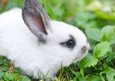 Baby white rabbit in grass — Stock Photo