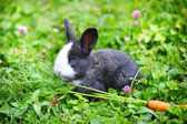 Funny baby rabbit with a carrot in grass — 图库照片