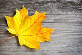 Autumn leaf over old wooden background. With copy space — 图库照片