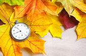 An old clock is on autumn maple leaves — Foto Stock